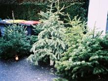 Recyclage des sapins de Noël